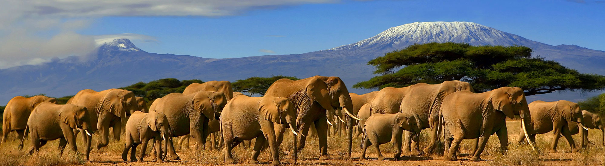 Wildlife Preservation - Elephants